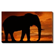 Tablou Canvas Elefant in Asfintit