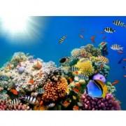 Tapet autocolant -Peste coral 1 - 150x200cm