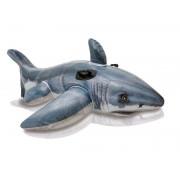 Rider Shark