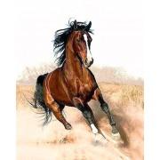Gaira Malování podle čísel Cválající kůň M1182
