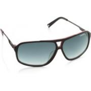 Carrera Rectangular Sunglasses(Blue)
