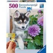 Пъзел Ravensburger 500 елемента, Сладко хъски, 7013682