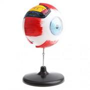 Aspiredeal Highly Detailed Human Eyeball Anatomy Model Anatomical Learning Display Kit