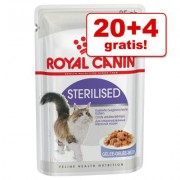 20 + 4 gratis! 24 x 85 g Royal Canin Maaltijdzakjes in Gelei of Saus - Intense Beauty in Saus
