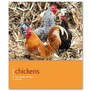 Pet Expert Chicken Pet Friendly