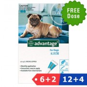 Advantage Medium Dogs 11-20lbs (Aqua) 6 Dose + 2 Doses Free