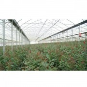 Folie solar Politiv, DIFFUSE, UVA, IR, AF, 0.150 mm, E1517