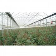 Folie solar Politiv, DIFFUSE, UVA, IR, EVA AF/AD, 0.180 mm E1517