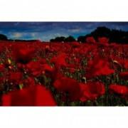 Tablou Canvas Camp de maci rosii 90 x 60 cm Rama lemn Multicolor