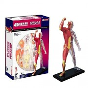 Tdou 4D Vision Human Anatomy - Muscle and Skeleton Model of The Body with 4 Dimensional