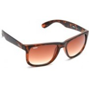 MTV Roadies Wayfarer Sunglasses(Brown)