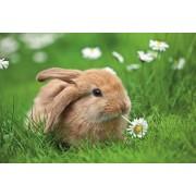Пазл - «Кролик в ромашках» XXL 150 шт