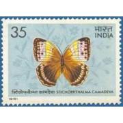 Butterflies - Stichophthalma Camadeva. Brush-Footed Butterfly, Stichophthalma camadeva, Morphinae,35 P.
