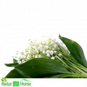 Ulei de Parfum de Lăcrimioare 100% 10 ml