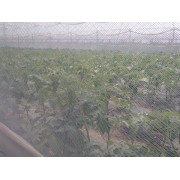 Plasa protectie contra insectelor 1.2*50 m