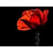 Tablou Canvas Mac rosu 80 x 60 cm Rama lemn Multicolor