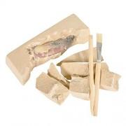 Dinosaur Tooth Toy Excavation Dig Kit