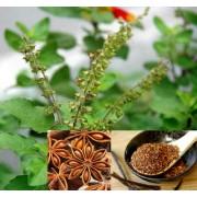 Ceai de plante Sleep Well