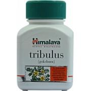 Tribulus Terrestris Gokshura 60caps