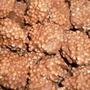 Milk Chocolate Rice Crisp Clusters