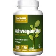 Jarrow Formulas Ashwagandha 300mg 120 vcaps