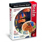 LEARNING RESOURCES MODEL BRAIN ANATOMY (Set of 3)