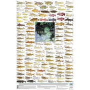 Freshwater Fishes, Southern Africa