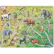 Puzzle Larsen - Il percorso da scimmia ad essere umano, 83 piese (63274)