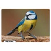 Modraszka - widokówka