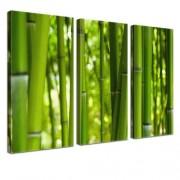 Sansibar Home 3-tlg. Leinwandbild-Set Bamboo Fotodruck Sansibar Home Größe: 80 cm H x 120 cm B x 2,5 cm T