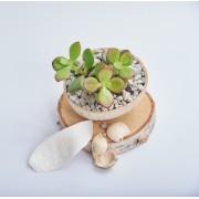 Petale decorative -Verzi