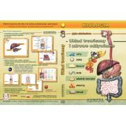 Układ trawienny i zdrowe odżyw. - program multimedialny