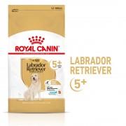 Royal Canin Labrador Retriever Adult 5+ pour chien - 2 x 12 kg