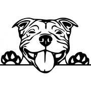 Staffordshire Terrier autómatrica