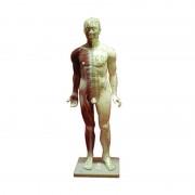 Corpo Humano Masculino (Fibra 84 cm)