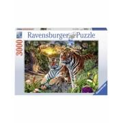 Puzzle Tigri, 3000 Piese Ravensburger