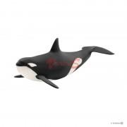 BALENA UCIGASA - SL14807