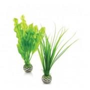 biOrb malá rostlina set zelená