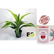 ES DRYCHEAN YELLOW GREEN NATURAL LIVE PLANT With Gift Anniversary Gift Mug