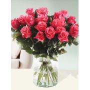 Surprose 20 roze Tacazzi rozen Rozen online bestellen & versturen Surprose.nl