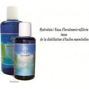 Eau florale Armoise arborescente - Artemisia arborescens - Sauvage