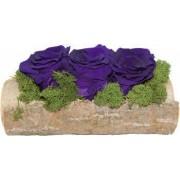 Trandafiri criogenati in suport de lemn Albastru