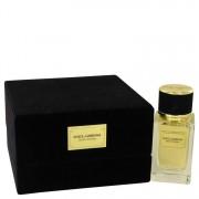 Dolce & Gabbana Velvet Patchouli Eau De Parfum Spray 1.6 oz / 47.32 mL Men's Fragrances 539503
