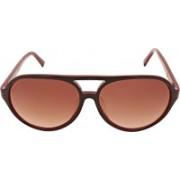 Calvin Klein Aviator Sunglasses(Brown)