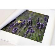Foto op los canvas doek 40x50 cm