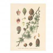 Dille&Kamille Poster, branche de pomme de pin, 18 x 24 cm