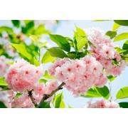 W + G Wizzard and Genius Fotobehang Sakura Blossum