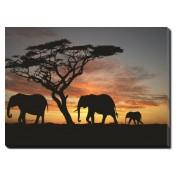 Tablou Canvas Familie de Elefanti
