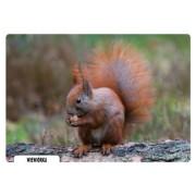 Wiewiórka - widokówka