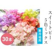 「寒冷地向け」スイートピー春色セット30本入 1/4~発送